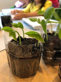 国分寺|インターナショナルキンダーガーデン|Growing Plants